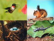 wildlifeweek_225.jpg__225x1000_q85